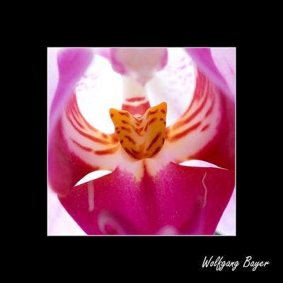 Orchideen Einblick