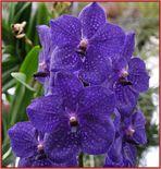 Orchideen erfreuen das Herz