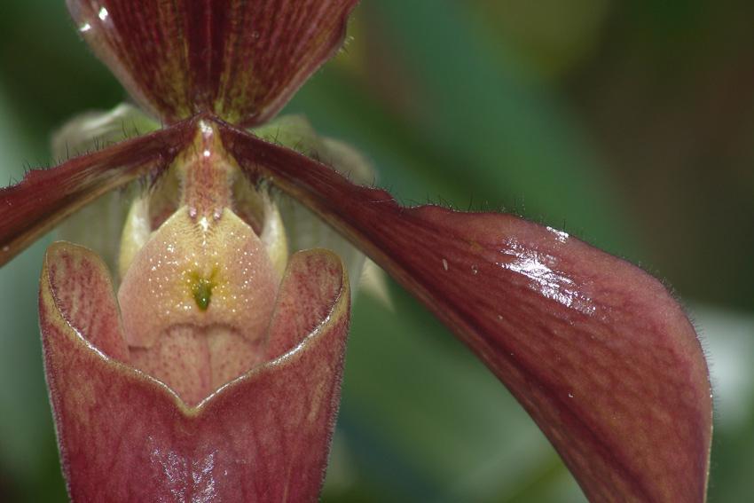Orchideen im Gewächshaus in den Herrenhäuser Gärten