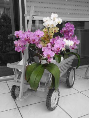 Orchideen im Leiterwagen I