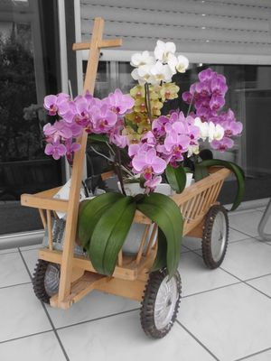 Orchideen im Leiterwagen II