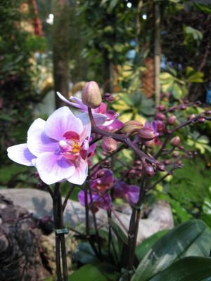 "Orchideen in der ""Wildnis"""