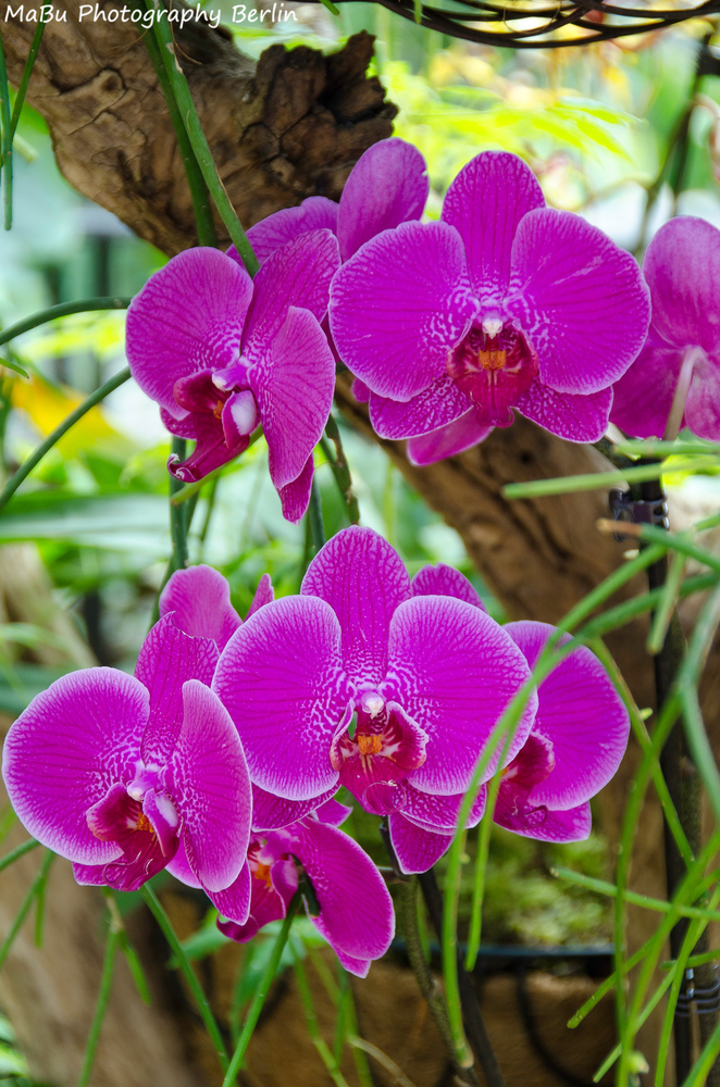Orchideen in Pink - Pink Orchids
