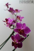 Orchideen- Makro 2
