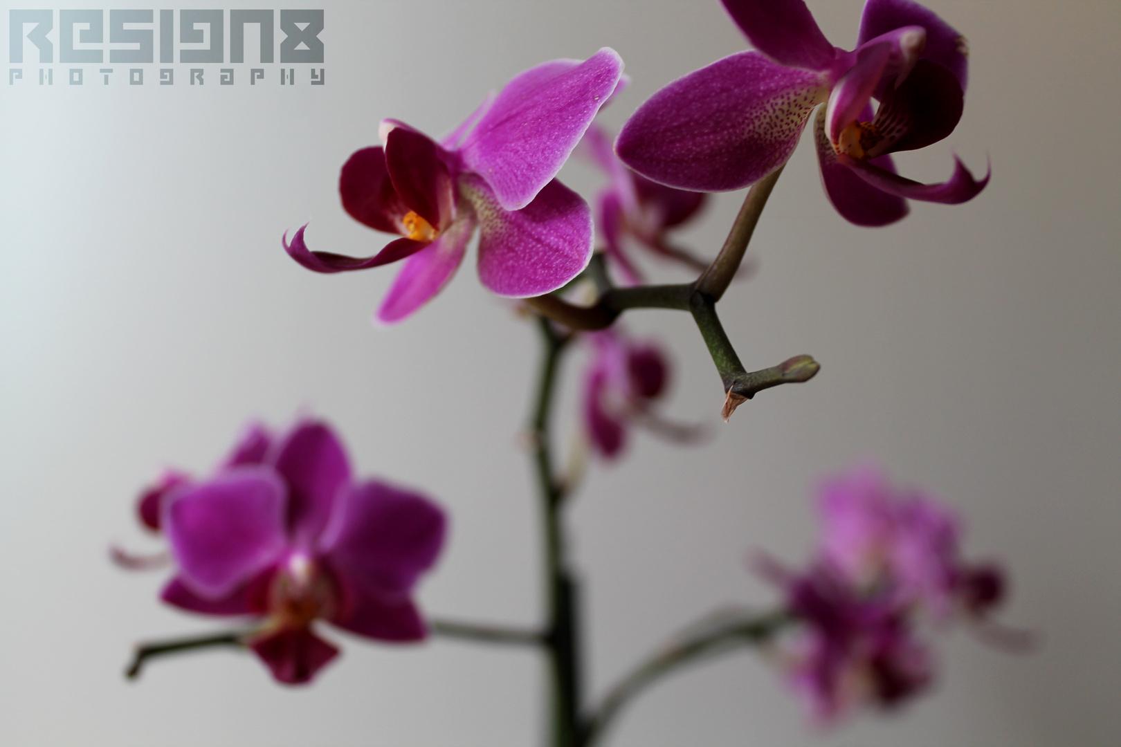 Orchideen- Makro