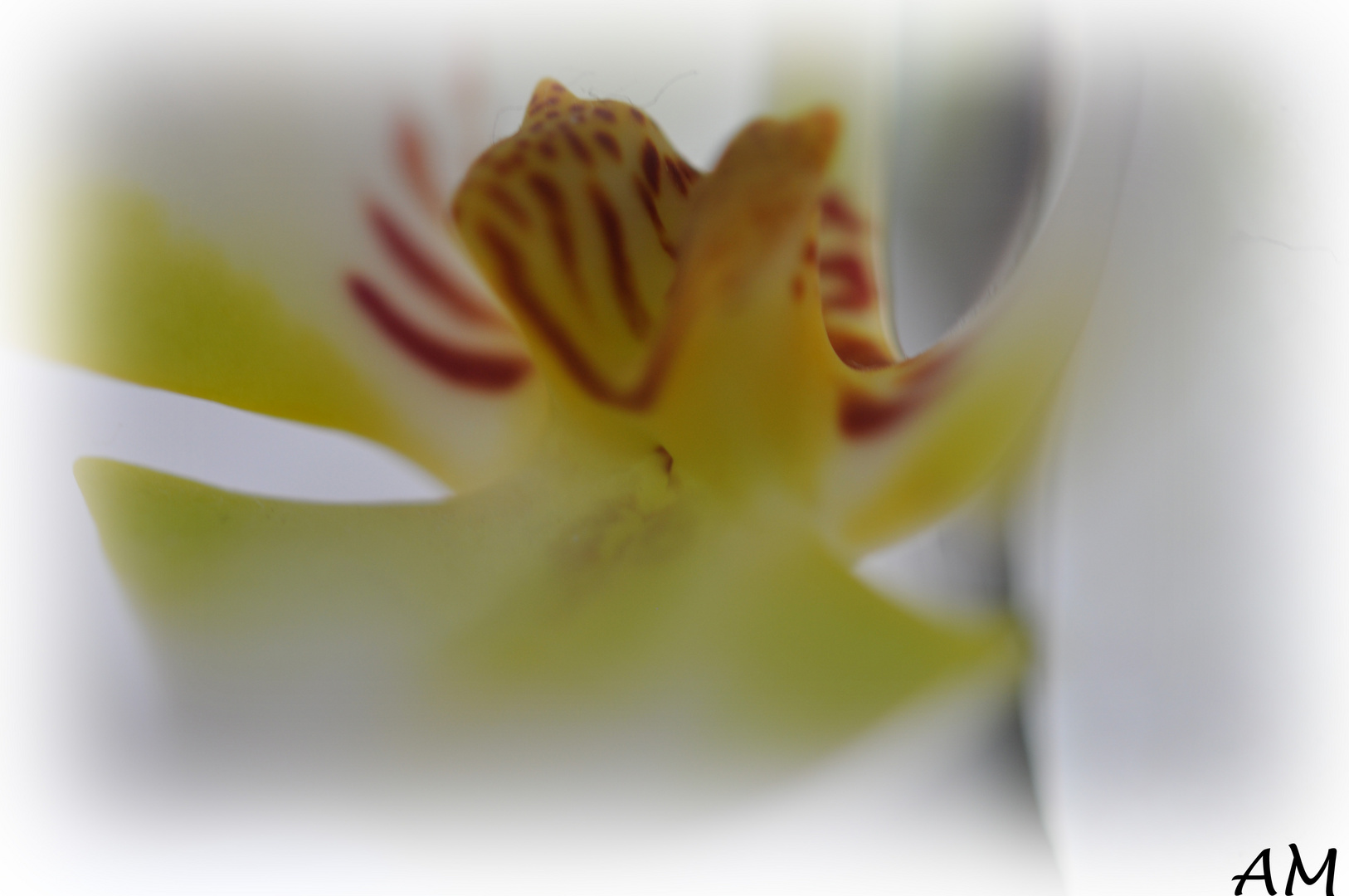 Orchideen Makro
