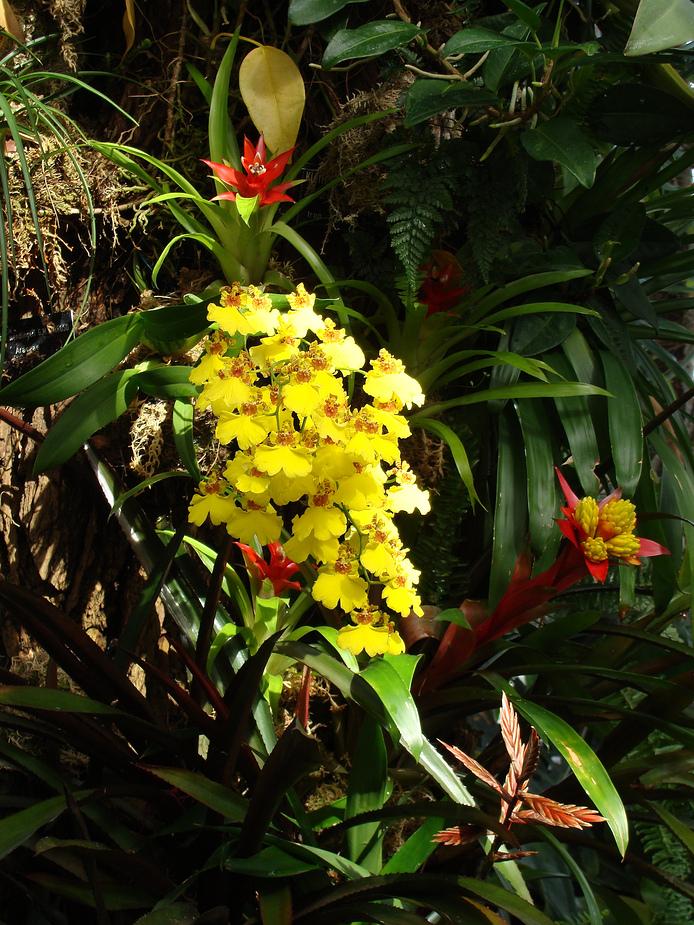 Orchideen mit Bromelien
