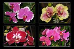 Orchideen-Pracht