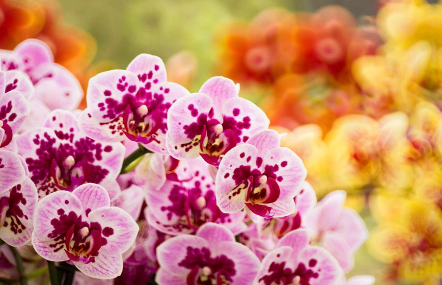 Orchideen Rausch