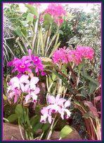 """Orchideen """"Rosa&Weiss"""""""