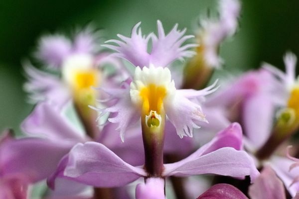 Orchideen-Schönheit