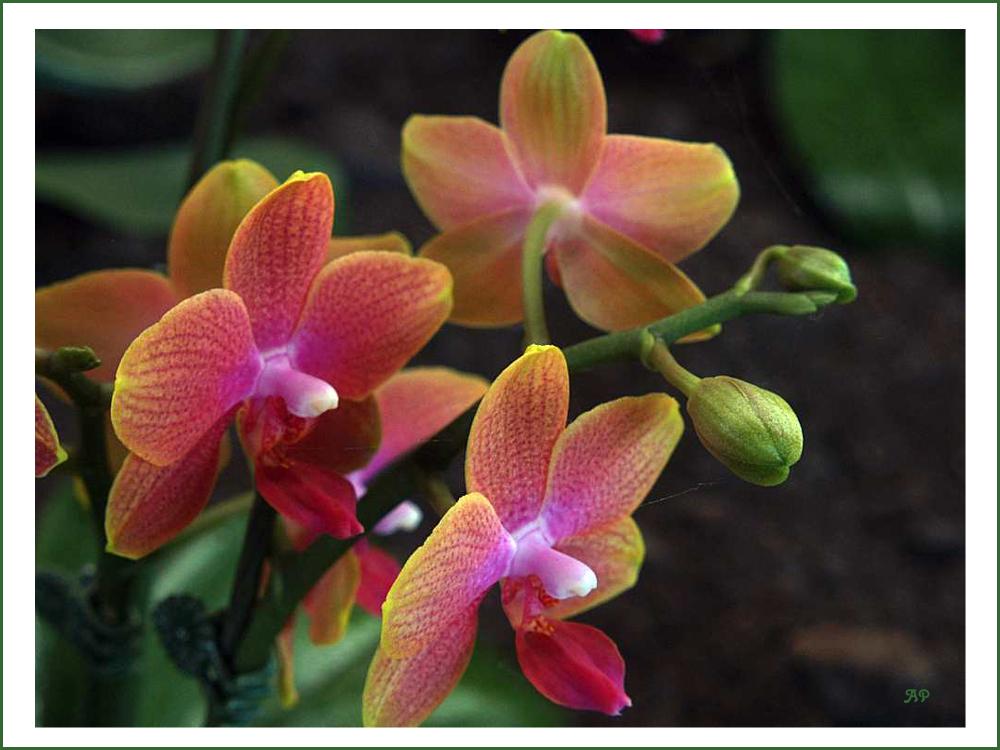 Orchideen-Vielfalt (1)