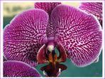 Orchideen-Vielfalt (3)
