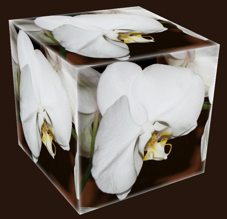Orchideen-Würfel