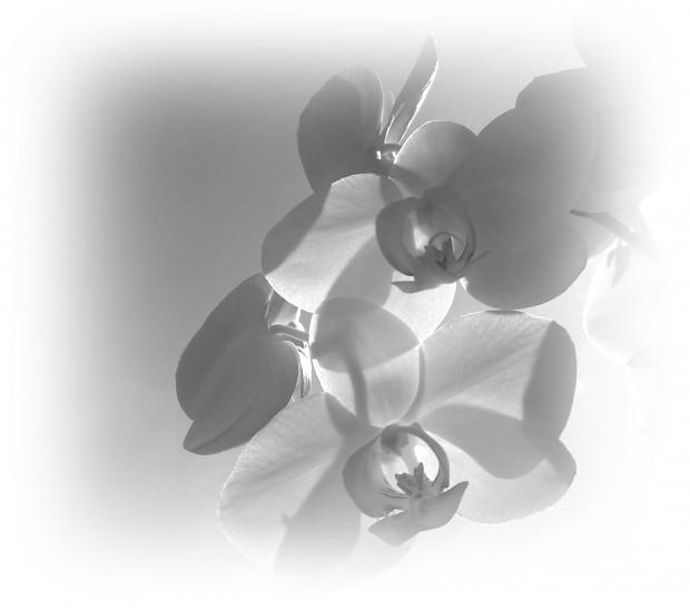 Orchideen zum Himmel