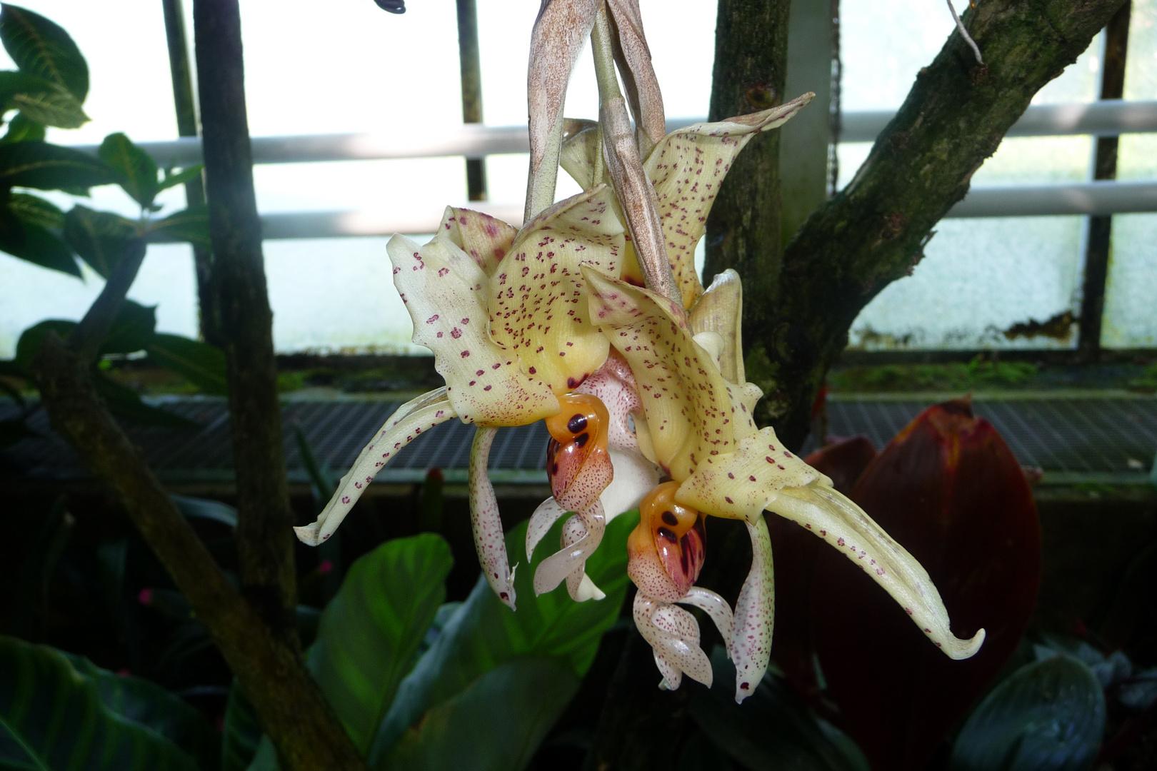 Orchideen - Zweisamkeit