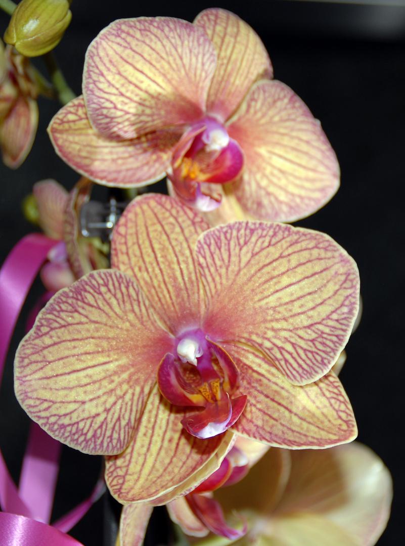 Orchideen1