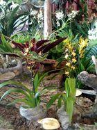 Orchideenausstellung im Merzig