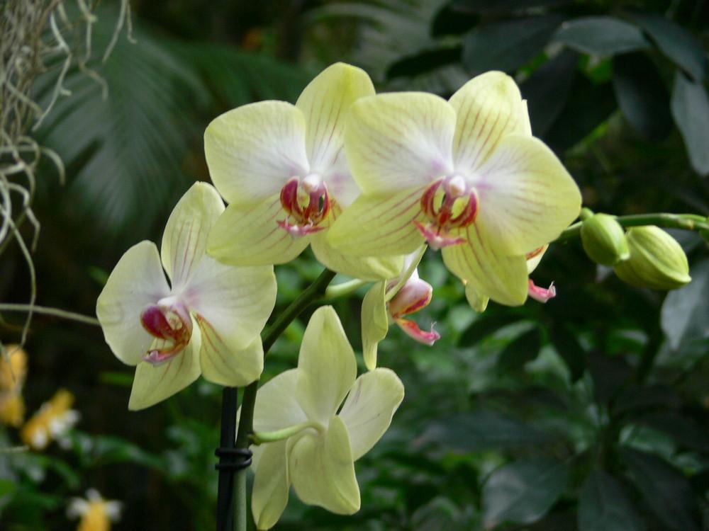 Orchideenausstellung2