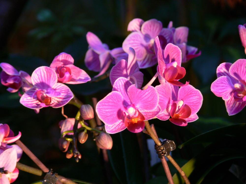 Orchideenausstellung4