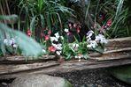 Orchideenbeet in der Biosphäre Potsdam
