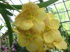 Orchideenblüte 2