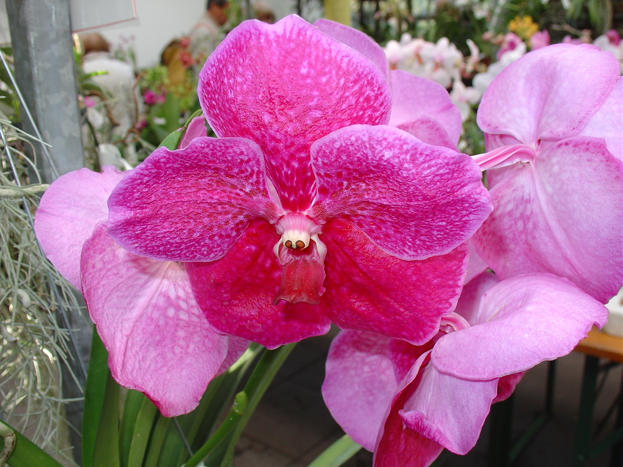 Orchideenblüte 3