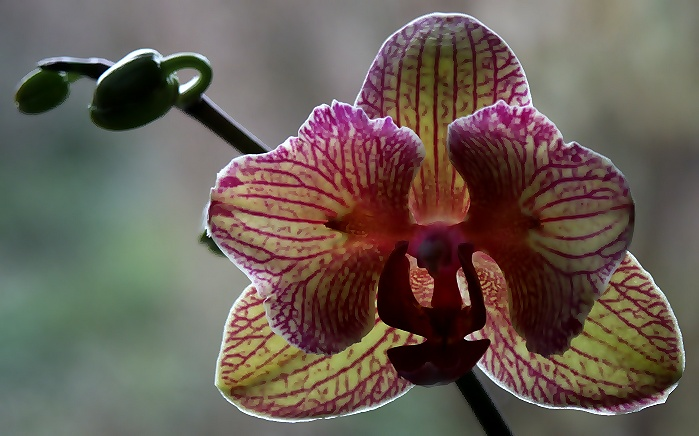 Orchideenblüte am Fenster