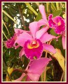 """Orchideenblüten"""