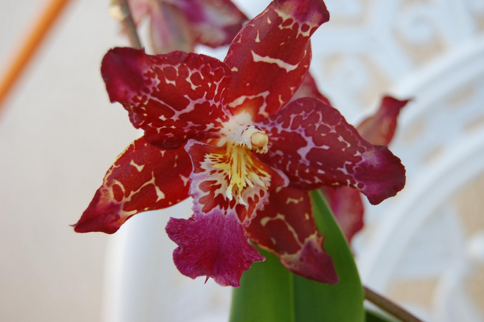 orchideen+erotik?