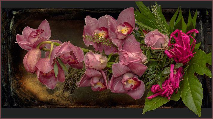 ORCHIDEENGRUSS