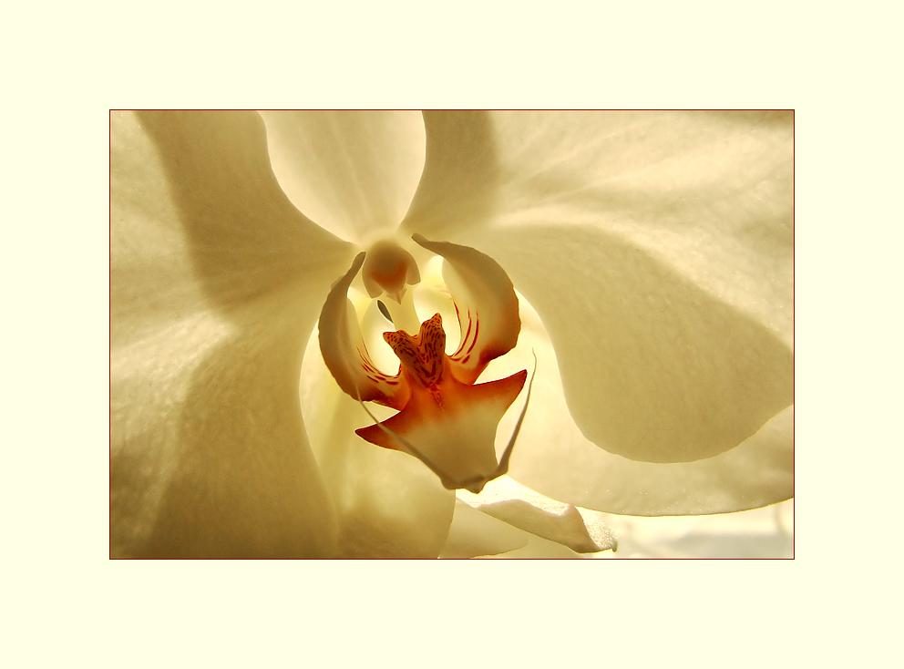~Orchideenherz~