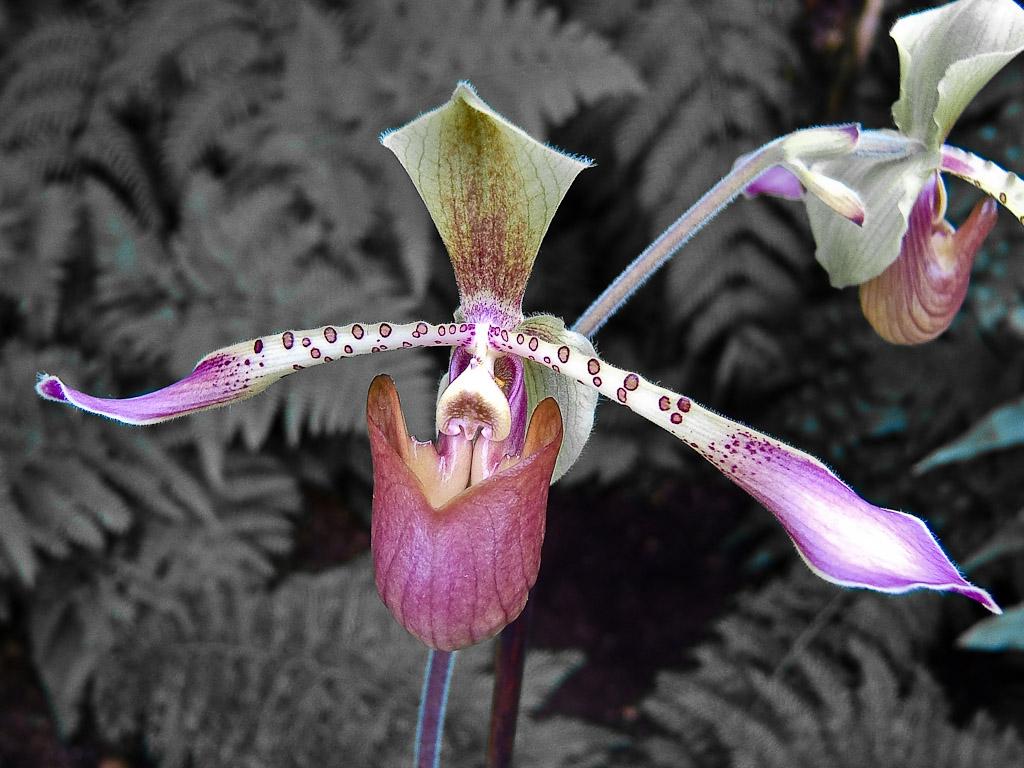 Orchideenkunst