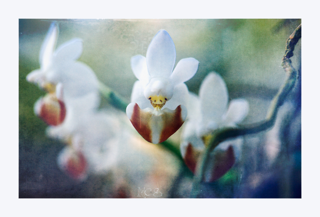 Orchideenleben