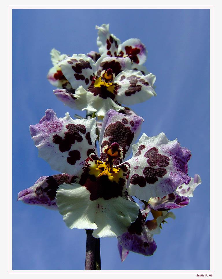 Orchideenleiter....