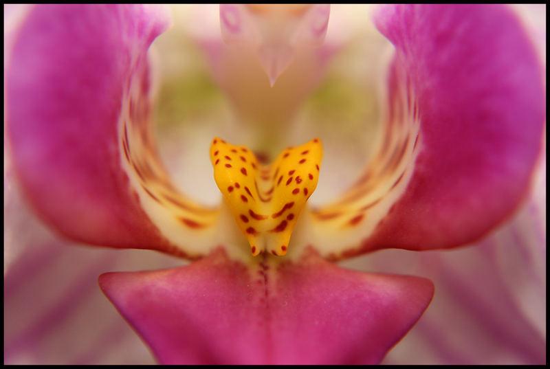 Orchideenmakro 2