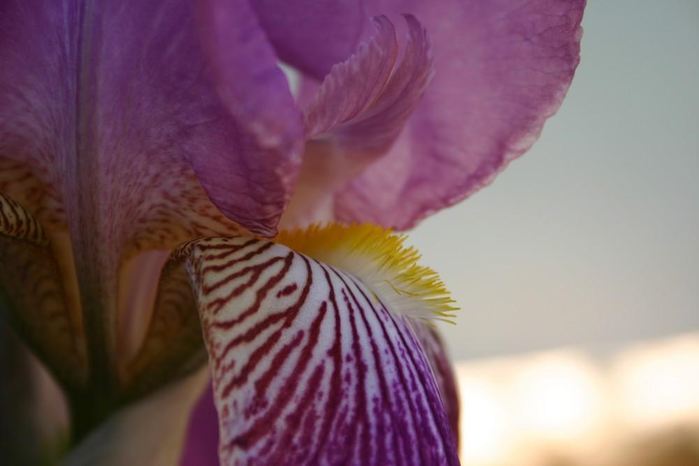 Orchideenportrait