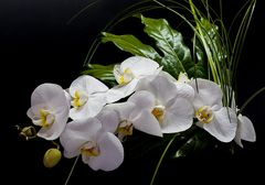 Orchideenrispe