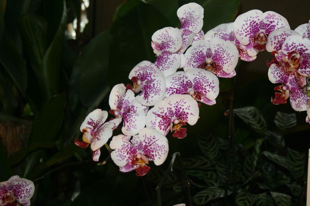Orchideenschau 2008