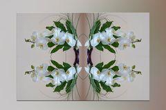 Orchideenspiegelung