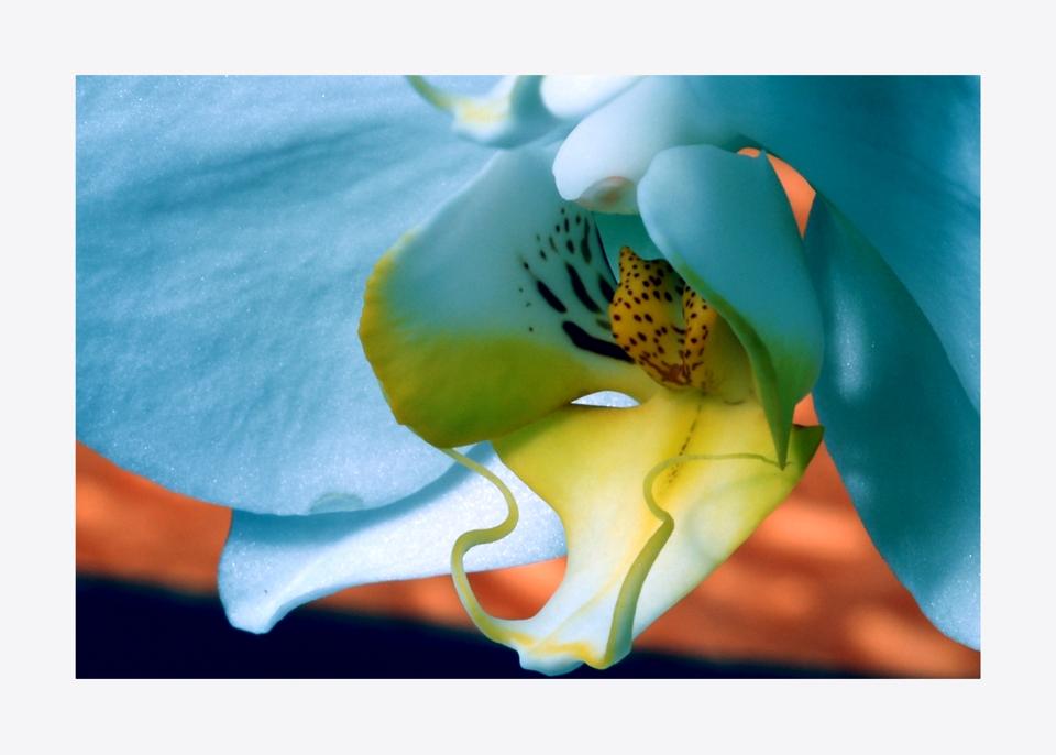 Orchideenspiel 10-08