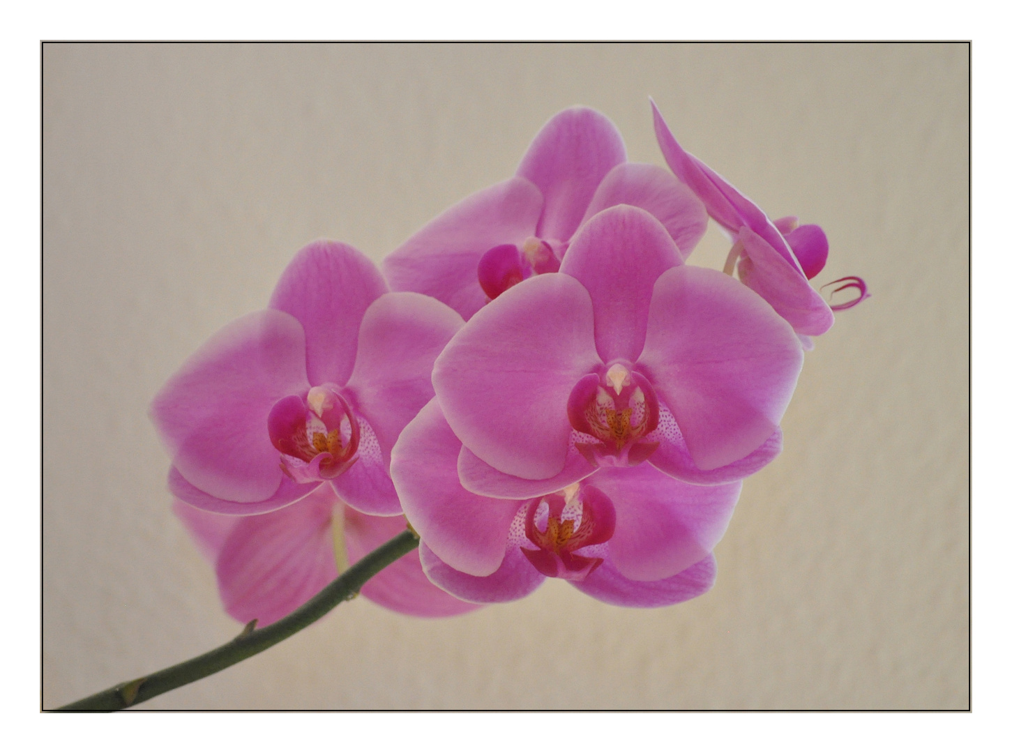 Orchideentag - 1