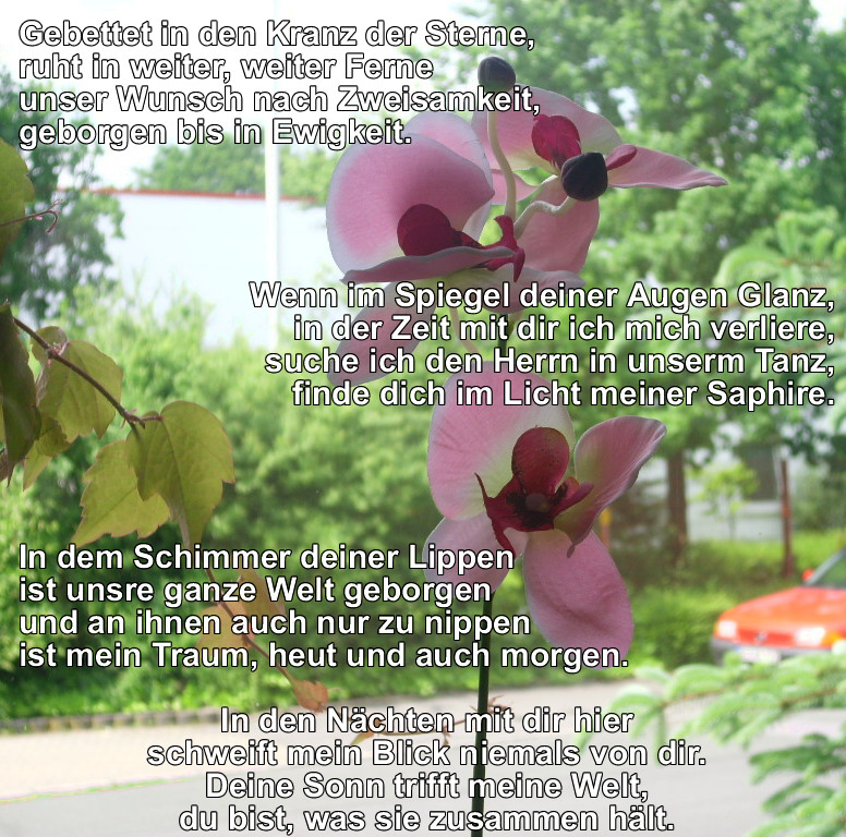 Orchideenverse