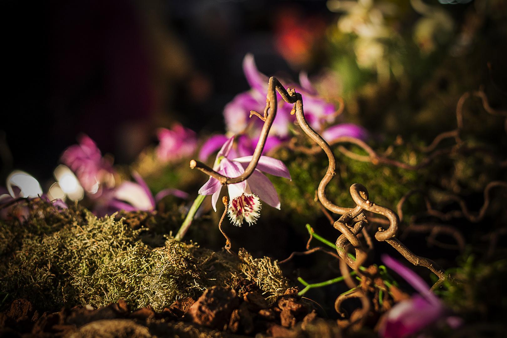 Orchideenwelt Dresden...