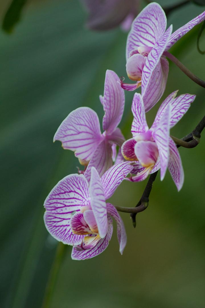 Orchideenzeit