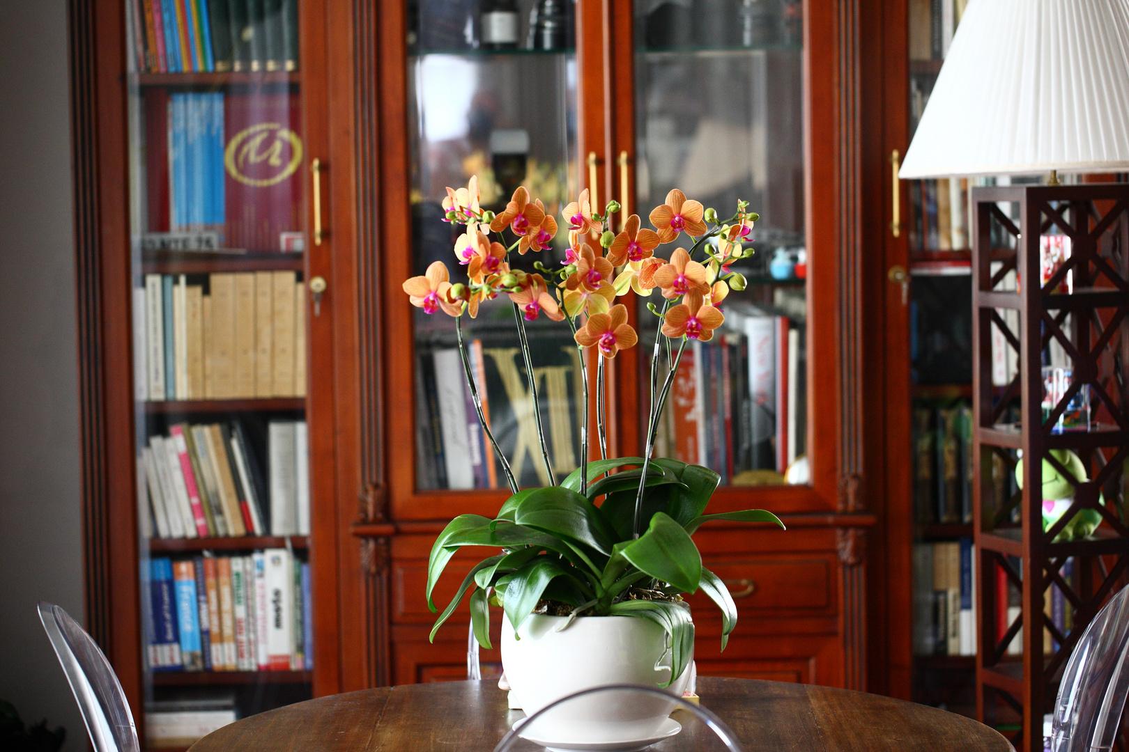 Orchidées à l'intérieur...