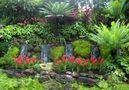 Orchidées au Botanic Garden de Singapour von Mahina