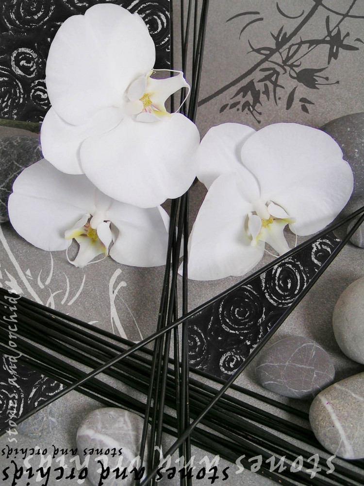 Orchidées blanches