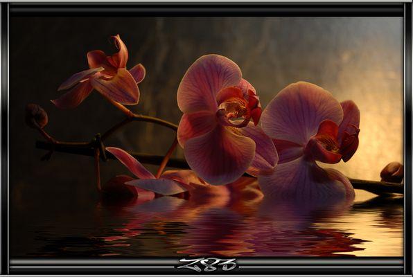 orchidés