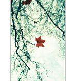 [Orchids & Autumn]